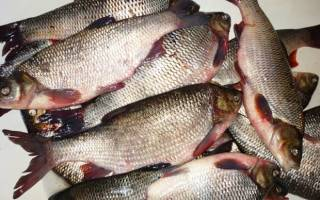 Жарить рыбу с описторхозом