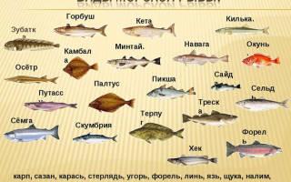 Название рыб с фото на букву с