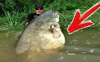 Самые большие рыбы в мире видео