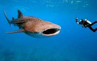 Сами большой рыба в мире видео