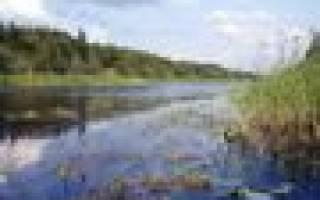 Новоладожский канал рыбалка отзывы