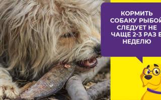 Можно ли собаку кормить речной рыбой