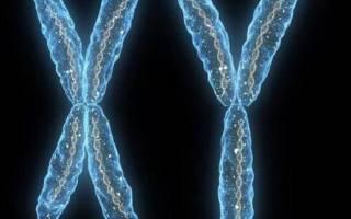 Сколько хромосом у нормального здорового человека