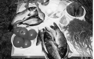 Как потрошить рыбу через жабры
