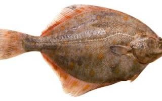 Информация о рыбе камбала