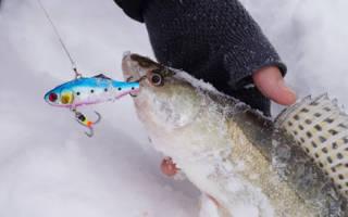 Ловля судака со льда на волге видео