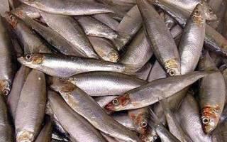 Рыба шпроты фото