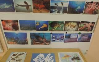 Конспект занятия по познанию в старшей группе на тему: рыбы
