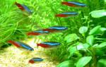 35 названий самых популярных аквариумных рыбок