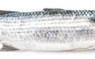 Вкусная и полезная кефаль. Что за рыба и как ее готовить!