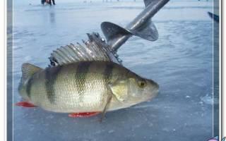 Блесны и мормышки для зимней рыбалки