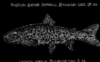 Почему рыбу назвали рыбой