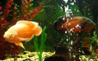 Желтая хищная рыба