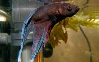 Транквилизатор для аквариумных рыб