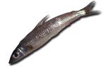 Рыба аргентина с овощами