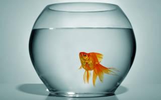 Сколько рыбы могут жить без кислорода