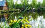 Выращивание рыбы видео