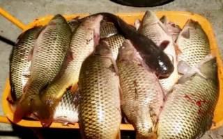 Самые опасные паразиты в морской и речной рыбе