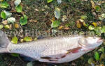 описания и особенности хищных рыб