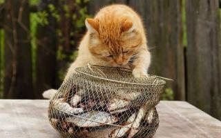 Можно кормить кошку сырой рыбой