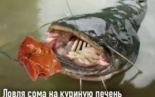 Ловля рыбы на куриную печень видео