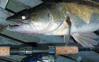 Пресноводная хищная рыба ответ