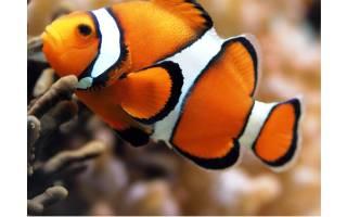 Рыбы океана фото для детей