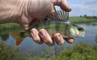 Вид вегетарианства когда едят рыбу