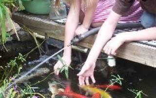 Кормление рыбы в пруду зимой