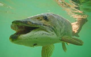 Рыбалка в дагестане осенью
