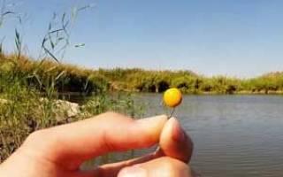 Рыбалка на карпа на горох и кукурузу