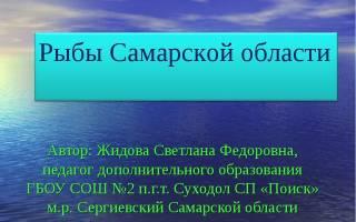 Рыбы самарской области фото и описание