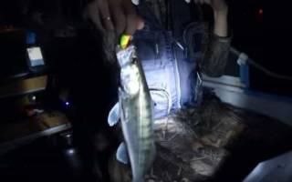 На какой цвет ловить судака ночью