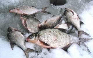 Озера в питере для рыбалки