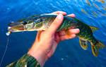 Видео рыбалка на севере пермского края