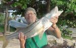 Виды рыб в карибском море