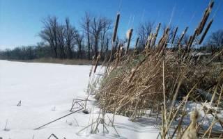 Как правильно ловить окуня зимой на мормышку видео