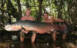 Самая древняя рыба в амазонке