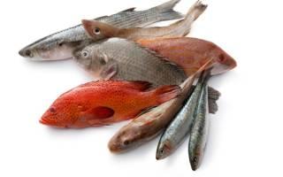 Какая рыба полезней вареная или соленая