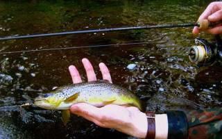 Как правильно ловить форель в реке