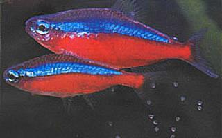Почему не приживаются рыбы