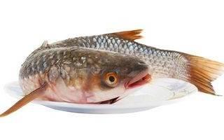 Где водится рыба пеленгас