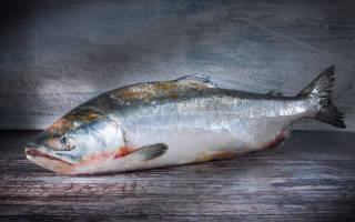 Свежая и замороженная рыба