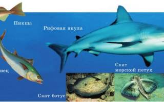 Рыбы описание класс