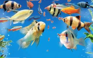 Фото рыбу прикормил