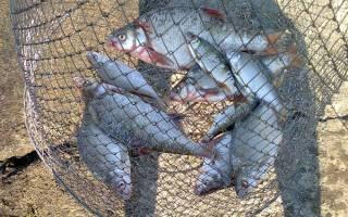 Погода для рыбалки в харькове ход рыбы