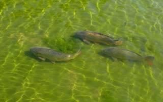 Разрешение на выращивание рыбы