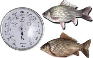 При каком давлении лучше ловится рыба летом