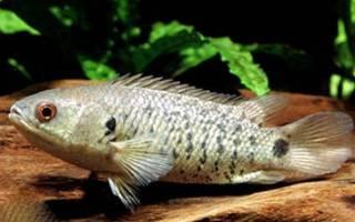 Рыба ползун в водоемах азии 6 букв