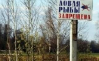 Мурманск запрет на ловлю рыбы
